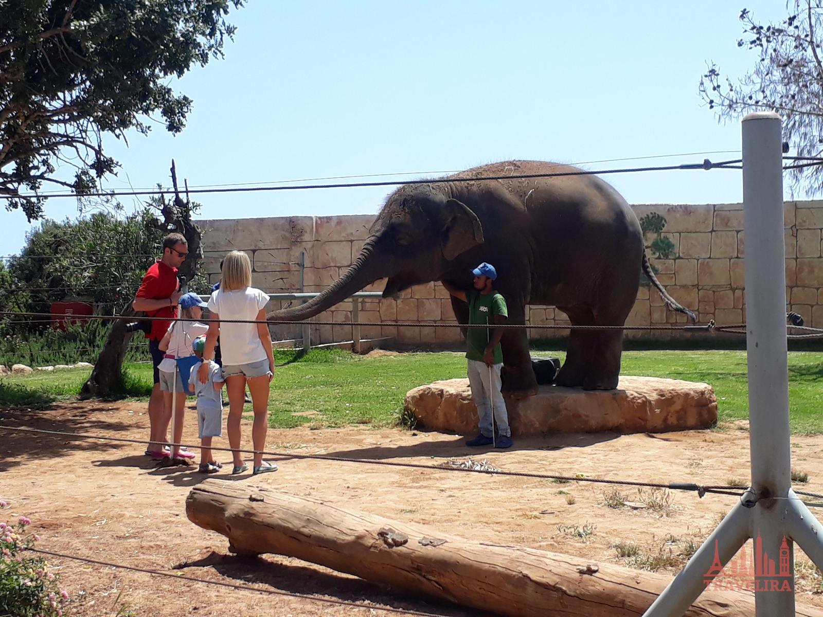 Зоопарк Пафос Кипр